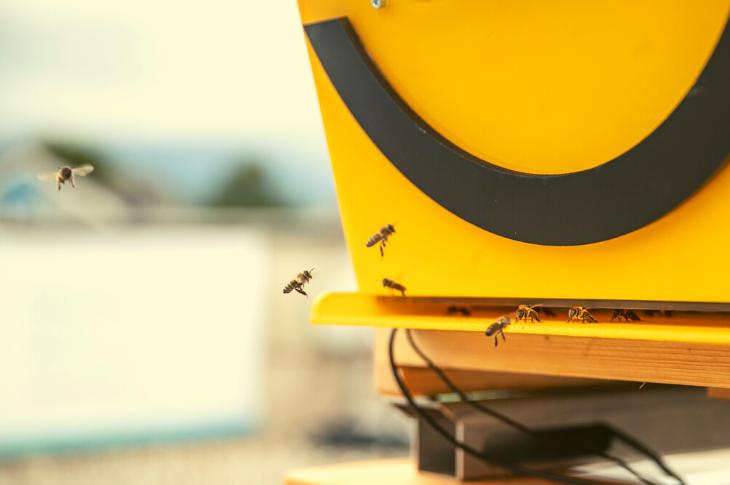 ZTE desarrolla dispositivo 5G con apps de biotecnología para cuidar abejas