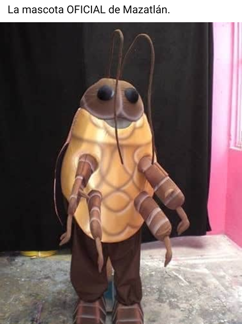 Memes de las cucarachas en Mazatlán