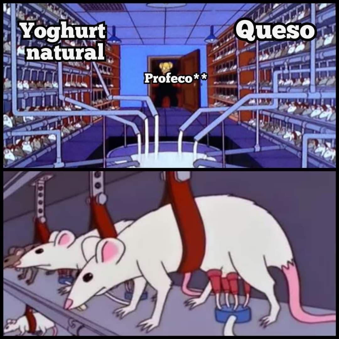 Memes del queso Philadephia