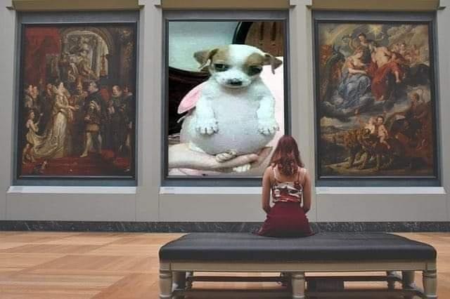Memes del perro panzón, todo chiquito, todo panzón