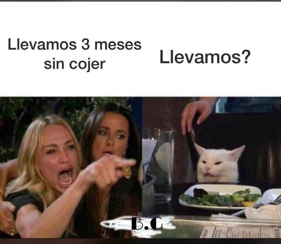 Memes del gato