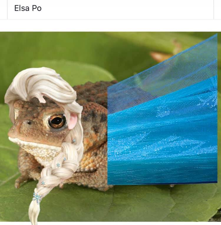 Memes de Elsa