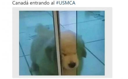 Memes del USMCA